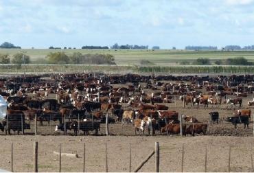 Inventario bovino USA, Cifras de la ganadería bovina de Estados Unidos, CONtexto ganadero, ganadería Colombia, Noticias ganaderas Colombia