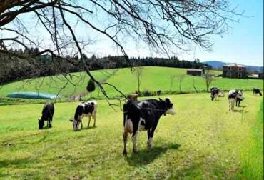Ganadería, ganadería colombia, noticias ganaderas, noticias ganaderas colombia, CONtexto ganadero, leche, leche ecológica, leche ecológica en españa, producción de leche ecológica, el país, puleva