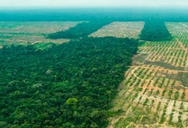 Deforestación, cambio climático, emisiones de carbono, Universidad Estatal de Ohio, Universidad de Yale, plantación árboles, manejo forestal, ganadería, ganadería colombiana, noticias de ganadería colombiana, Tardaguila CONtexto ganadero