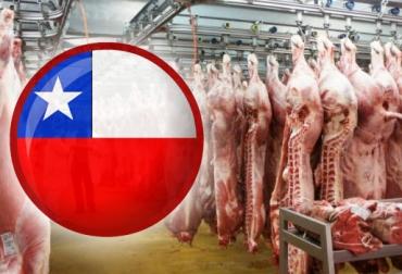 Ganadería, ganadería colombia, noticias ganaderas, noticias ganaderas colombia, CONtexto ganadero, Chile, carne colombiana a chile, exportaciones de carne colombiana, importaciones de carne en chile, chile colombia, ICA, fedegan, fedegán colombia, SAG, sag chile