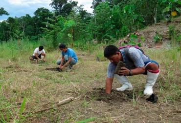 Ganadería, ganadería colombia, noticias ganaderas, noticias ganaderas colombia, CONtexto ganadero, Perú, bosques, bosques perú, cuidado de los bosques en perú, manejo sostenible de los bosques, manejo sostenible de los bosques en perú