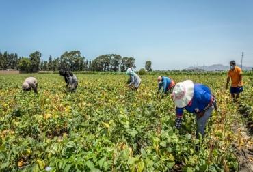 Ganadería, ganadería colombia, noticias ganaderas, noticias ganaderas colombia, CONtexto ganadero, Perú, agro, agro peruano, enfermedades agro del perú