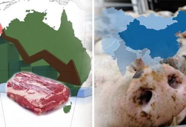 carne, cerdo, Producción, Peste Porcina Africana, China, exportaciones, importaciones, FAO, Asia, Vietnam, exportaciones carne Australia 2021, Australia bovinos 2021, Australia ganado bovino 2021, hato ganadero en Australia, hato ganado bovino Australia 2021, Australia, carne australiana, Nueva cepa de peste porcina africana en China 2021, cepa PPA, cepa peste porcina africana, peste porcina africana en China 2021, ganaderos, ganaderos colombia, ganado, vacas, vacas Colombia, bovinos, Ganadería, ganadería c