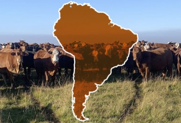 Sudamérica carne, producción de carne en Sudamérica, carne América Latina, carne sostenible, cumbre ONU, consumo carne, producción carne, defensa de la ganadería, defensa de la carne bovina, ganadería sostenible, carne Argentina, carne Uruguay, ganado bovino, ganadería bovina, ganaderos, ganaderos colombia, ganado, vacas, vacas Colombia, bovinos, Ganadería, ganadería colombia, noticias ganaderas, noticias ganaderas colombia, CONtexto ganadero, contextoganadero