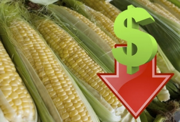 Precio maíz 2021, precio maíz 2021, maíz, soya, precio internacional maíz, alimentos balanceados, precio maíz Colombia, Costos de Producción, lechería, materias primas, USDA, estados unidos, verano, demanda, dólar, mercados internacionales, ganado bovino, ganadería bovina, carne, leche, ganaderos, ganaderos colombia, ganado, vacas, vacas Colombia, bovinos, Ganadería, ganadería colombia, noticias ganaderas, noticias ganaderas colombia, CONtexto ganadero, contextoganadero