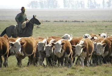 Uruguay, pastoreo, alternativa, Competitividad, campo natural, ingreso, sustentabilidad, intensificación ecológica, producción de forraje, consumo, eficiencia, productividad, sostenibilidad, resiliencia, variabilidad climática, costo, energia, Recursos Naturales, ecosistema, biodiversidad, ciclos biogeoquímicos, investigación, disponibilidad, servicios ecosistémicos, Ganadería, ganadería colombia, noticias ganaderas colombia, CONtexto ganadero