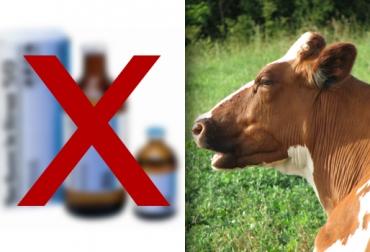 antibióticos en animales