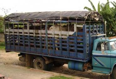 contrabando ganado