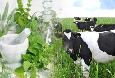 homeopatía para ganado