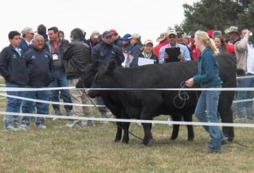 ganadería Nueva Zelanda