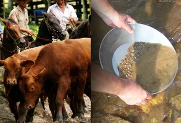peligros para la ganadería