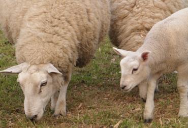 fertilidad en ovenas Colombia