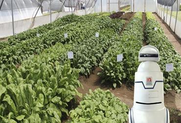 Robot con inteligencia artificial para cultivos intensivos
