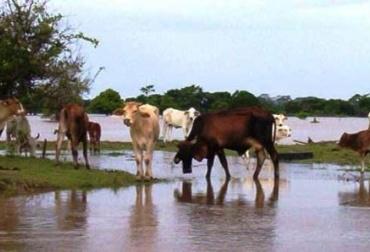 Pólizas de seguros para ganaderos