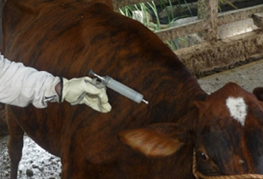 OIE reconoce a Perú como país libre de fiebre aftosa sin vacunación