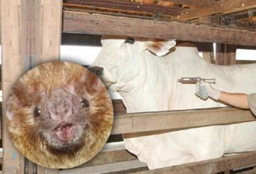 rabia bovina Colombia