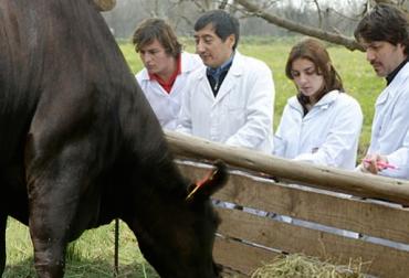fármacos en la ganadería