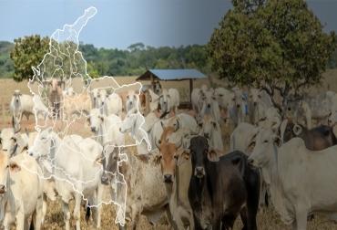 Fedegán, Fondo Nacional del Ganado, Municipios Ganaderos Sostenibles: una estrategia viable, pequeños ganaderos, C T e I, Ganadería colombiana: Hoja de ruta 2018 – 2022', Contexto ganadero, noticias ganaderas, ganadería bovina