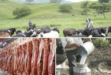 Colombia, ganadería bovina, leche, carne, abastecimiento, Ganaderos garantizan el abastecimiento de carne y leche, José Félix Lafaurie Rivera, fedegan, producción de carne bovina consumo percata de carne y leche, producción de leche, FNG, fomento al consumo, programa Fomento al Consumo, Fedegán-FNG, CONtexto ganadero, noticias ganaderas