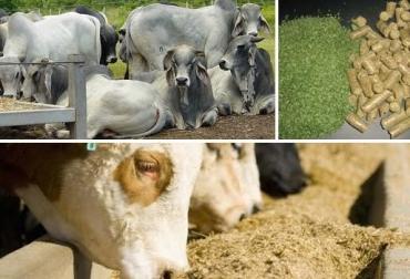 concentrados para ganado de leche y doble propósito