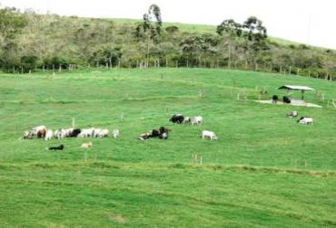 rotación de potreros en la ganadería