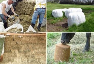 suplementación ganado verano ganadería colombia