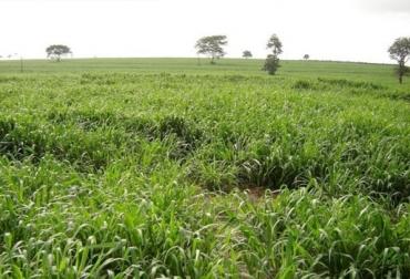 suelos, regiones, naturales, Colombia, productores, ganaderos, agricultores, ganado