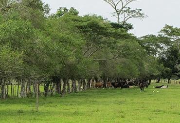 sistemas silvopastoriles, tipos de árboles, importancia de los árboles, bondandes de los árboles, sector ganadero, trópico alto, trópico bajo, contexto ganadero