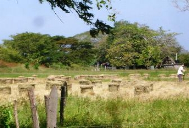 Producción henolaje y farvo en Bolívar