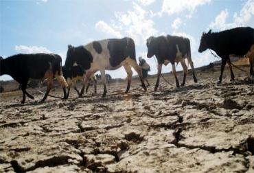 El intenso verano perjudica la producción ganadera de Colombia
