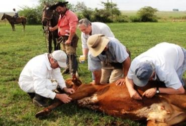 Control de parásitos en ganado