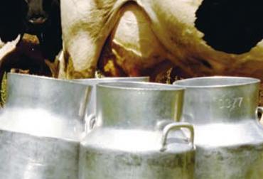producción de leche en Colombia.