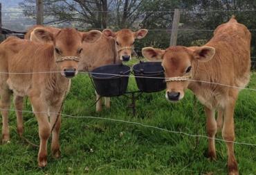 Enfermedades reproductivas en el ganado