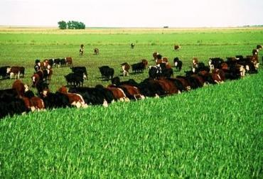 La ganadería mejora gracias al pastoreo rotacional