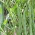 Colombia, Agrosavia frijol, frijol biofortificado, productores del Caribe, Agrosavia entregó otro frijol biofortificado a los productores del Caribe, Corpoica Rojo 43,  contiene mayor concentración de hierro y zinc, CIAT, Caribe seco (departamentos de Cesar, La Guajira, Magdalena y Bolívar), deficiencia nutricional, Ganadería, ganadería colombiana, noticias ganaderas, noticias ganaderas Colombia, CONtexto ganadero