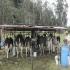 10 componentes que agobian producción en Valle de Ubaté, altas temperaturas en el día, bajas temperaturas en la noche, bajón productivo, baja precio de leche, escasez de pastos, duplican  precios de heno, suplementos alimenticios, CONtexto ganadero, noticias de ganadería colombiana.