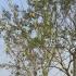 La Guajira Verano, verano guajira, Problemas ganadería Guajira, frutos árboles para sostener al ganado, ganaderos la guajira, Guácimo, Totumo, algarrobillo, Trupillo, Ganaderos La Guajira marzo 2019, ganaderos La Guajira verano marzo 2019, falta de ayudas Gobierno Ganadería Guajira marzo 2019, afectaciones verano ganadería Guajira 2019, suplementos bovinos ganadería Guajira, Proyectos ganaderos La Guajira, CONtexto ganadero, ganaderos colombia, noticias ganaderas colombia